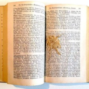 A Pressed Edelweiss Inside New Testament